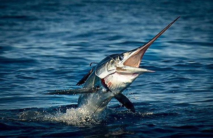 Los cabos archives jud cabo real estate for Los cabos fishing